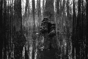 Swamptree 16